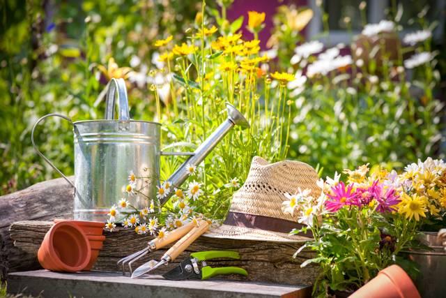 Como cuidar das plantas e do jardim