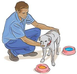 como-cuidar-animais-domesticos